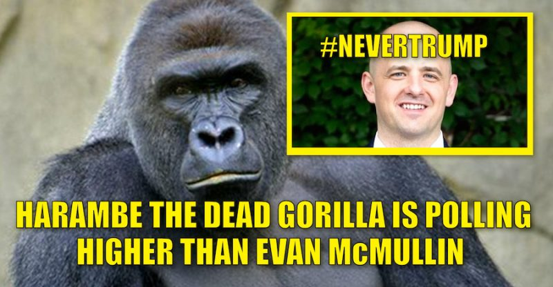 Harambe polled higher than Evan McMullin
